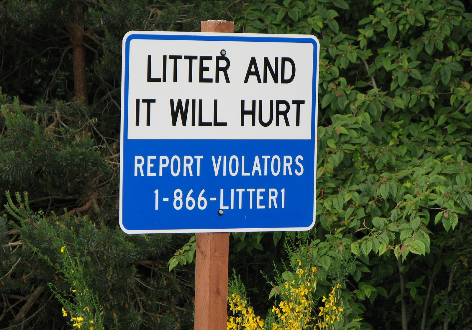 Sign - Litter and it will hurt